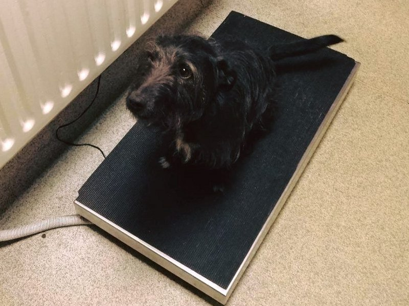 Dog sitting on a weighing scales